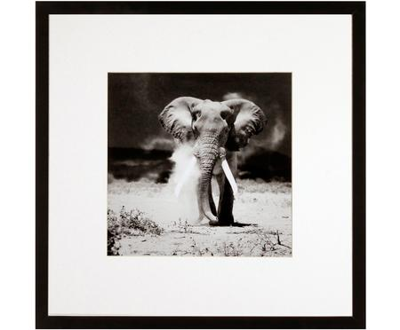 Impresión digital enmarcada Elephant