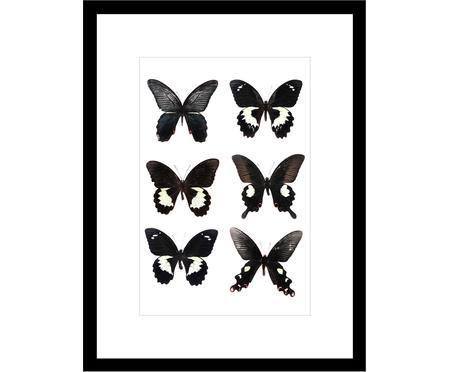 Impresión digital enmarcada Butterflies Dark